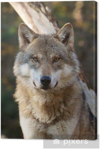 Tableau sur toile Loup gris, Canis lupus - Thèmes