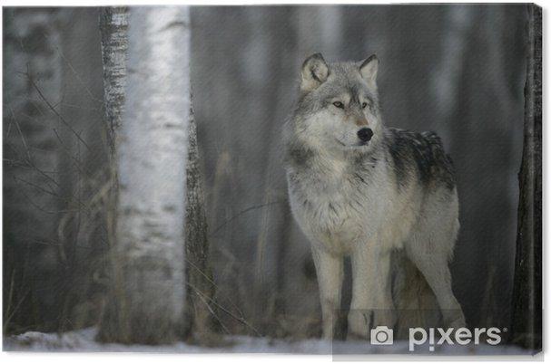 Tableau loup gris nature 4 tableaux sur toile loup gris canis lupus
