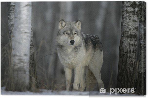 Tableau loup gris nature 2 tableaux sur toile loup gris canis lupus