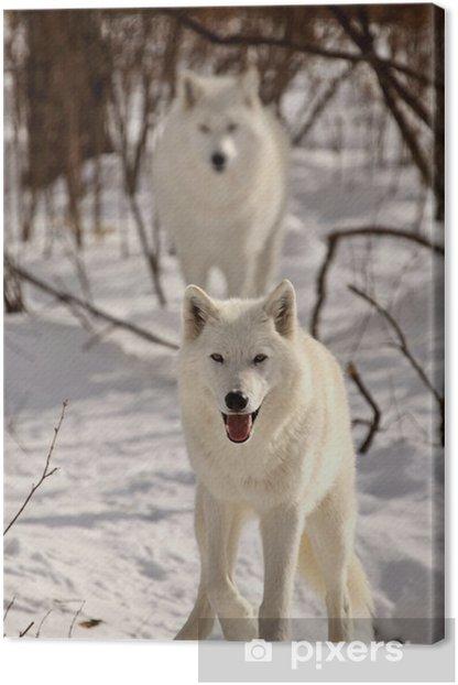 Tableau sur toile Loups arctiques en hiver - Thèmes