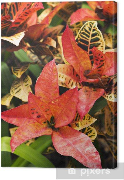 Tableau sur toile Lumineux plante tropicale. - Arbres