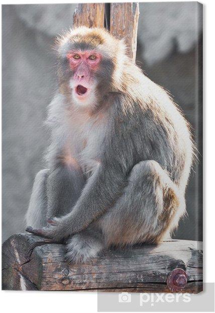 Tableau gorille couleur 4 tableaux sur toile macaque japonais