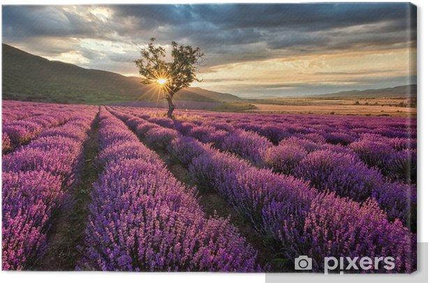 Tableau sur toile Magnifique paysage avec un champ de lavande au lever du soleil - Thèmes
