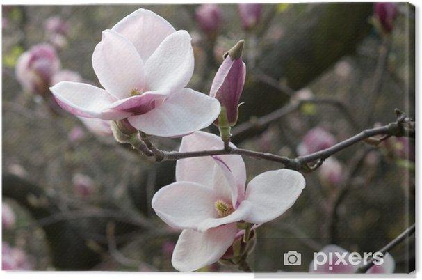 Tableau sur toile Magnolia - Thèmes
