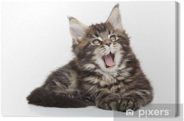Tableau sur toile Maine Coon Kitten - Mammifères