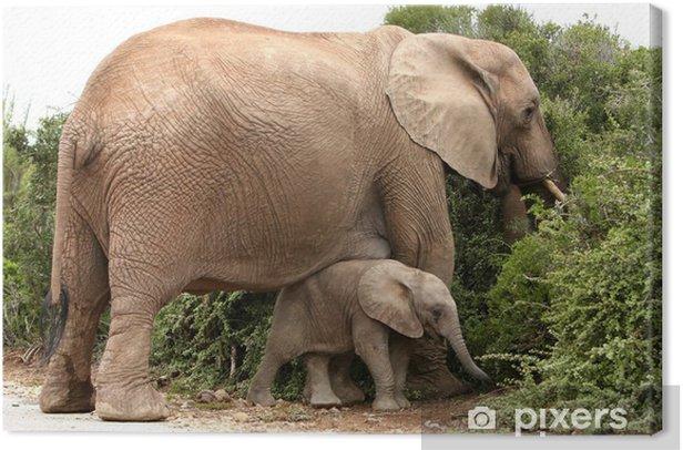Tableau sur toile Maman et bébé éléphant d'Afrique - Thèmes