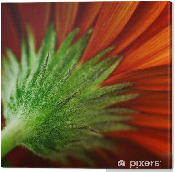 Tableau sur toile Marguerite - Fleurs
