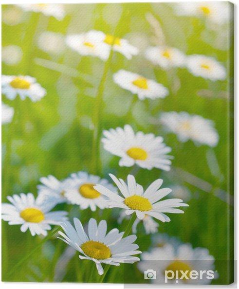 Tableau sur toile Marguerites blanches et jaunes - Saisons