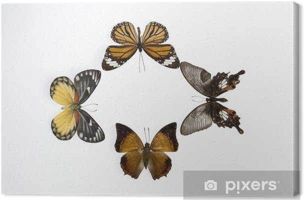 Tableau sur toile Mariposas7852 - Autres Autres