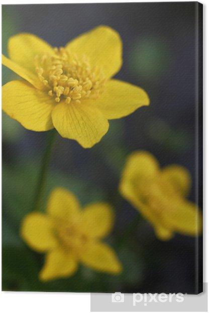 Tableau sur toile Marsh marigold - Fleurs
