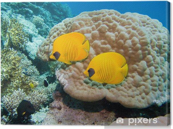 252fb83560 Tableau sur toile Masque poissons papillons • Pixers® - Nous vivons ...
