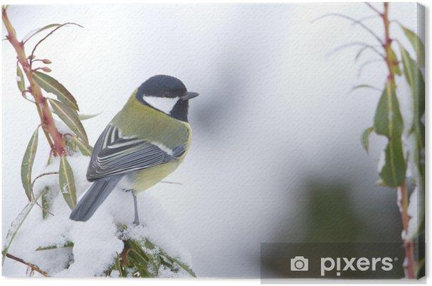 Tableau sur toile Mésange charbonnière en hiver sous la neige - Oiseaux