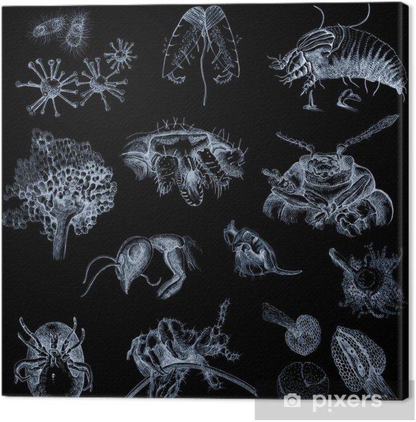Tableau sur toile Micro-organismes (les images dans le style scientifique. Dessins) - Autres Autres