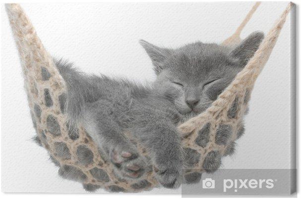 Tableau sur toile Mignon chaton gris couché dans un hamac - Vacances