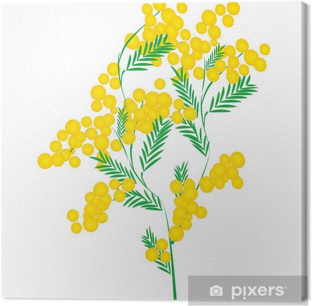 Tableau sur toile Mimosa - Fleurs