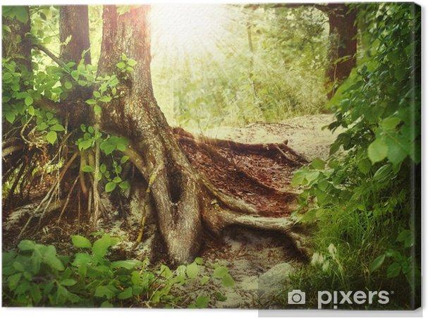 Tableau sur toile Misty Vieille Forêt - Forêt