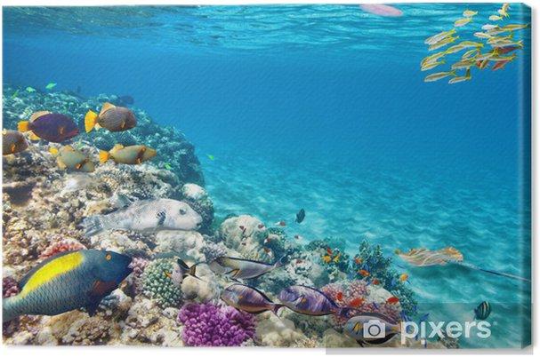 Tableau sur toile Monde sous-marin avec des coraux et des poissons tropicaux. - Animaux marins