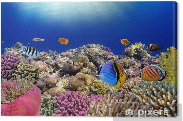 Tableau sur toile Monde sous-marin. Poissons coralliens de la mer Rouge. - Poissons