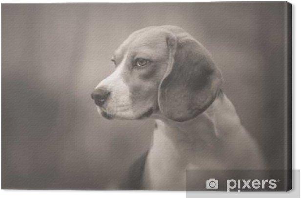 Tableau sur toile Monochrome portrait de beau chien Beagle - Animaux