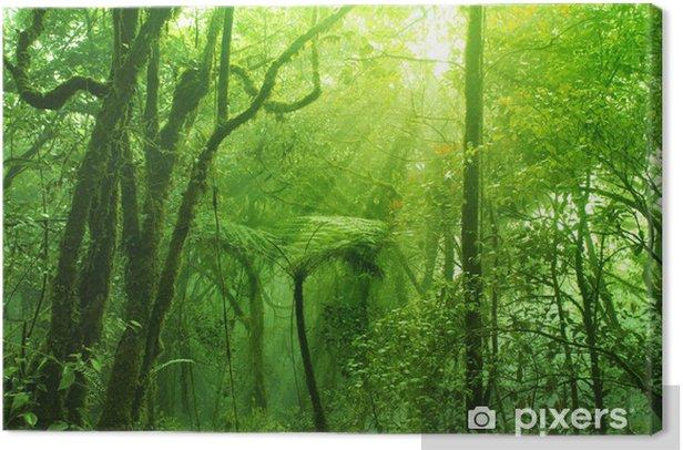 Tableau sur toile Mossy forêt - Thèmes