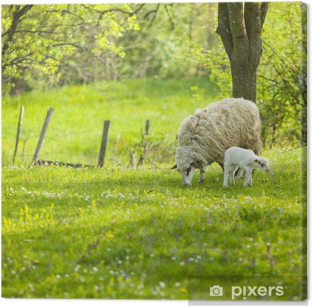 Tableau sur toile Moutons et agneau sur la zone verte - Paysages urbains