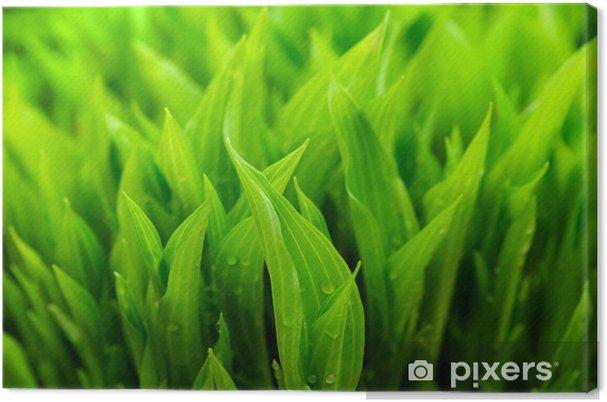 Tableau sur toile Nature fond vert - Saisons