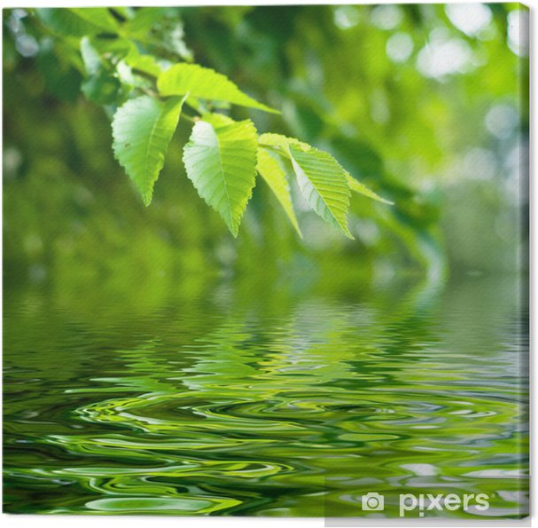 Tableau Sur Toile Nature Zen