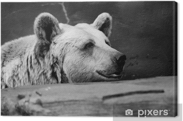 Tableau sur toile Noir et blanc ours brun - Thèmes