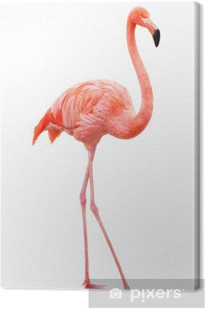 Tableau sur toile Oiseau flamant marchant sur un fond blanc - Sticker mural