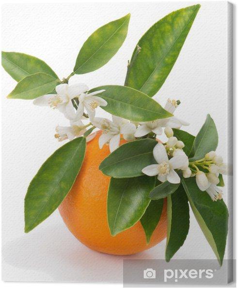 Tableau sur toile Orange avec des fleurs - Fruits