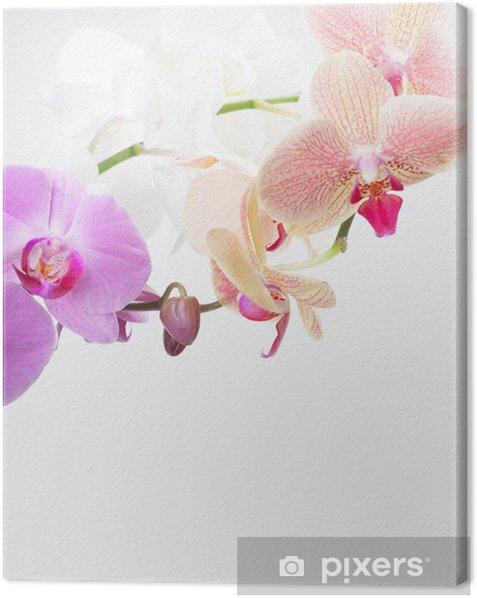 Tableau sur toile Orchid isolé sur blanc - Plantes