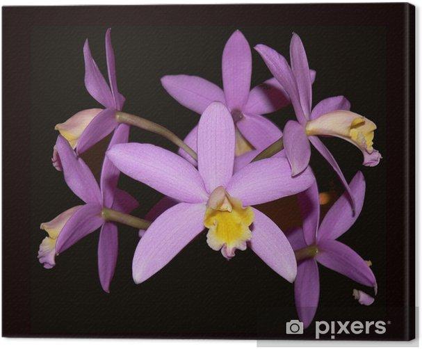 Tableau sur toile Orchidée 9 - Fleurs