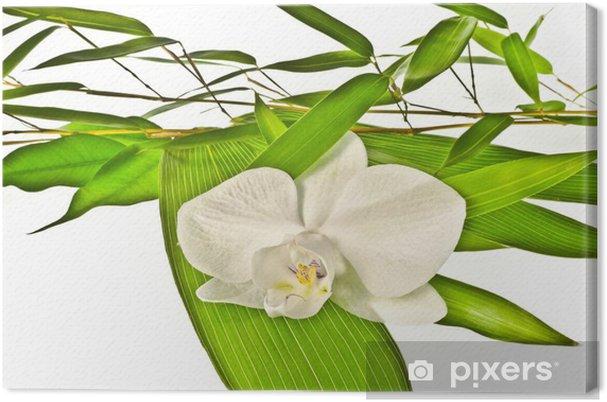 Tableau sur toile Orchidée blanche et le bambou - Fleurs