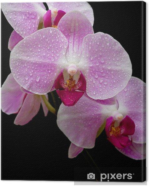 Tableau sur toile Orchidée rose près - Fleurs