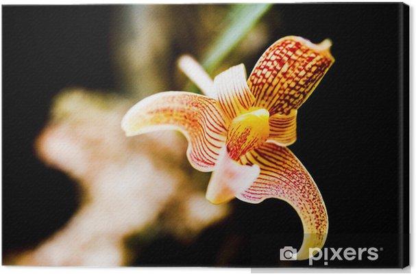 Tableau sur toile Orchidée - Fleurs