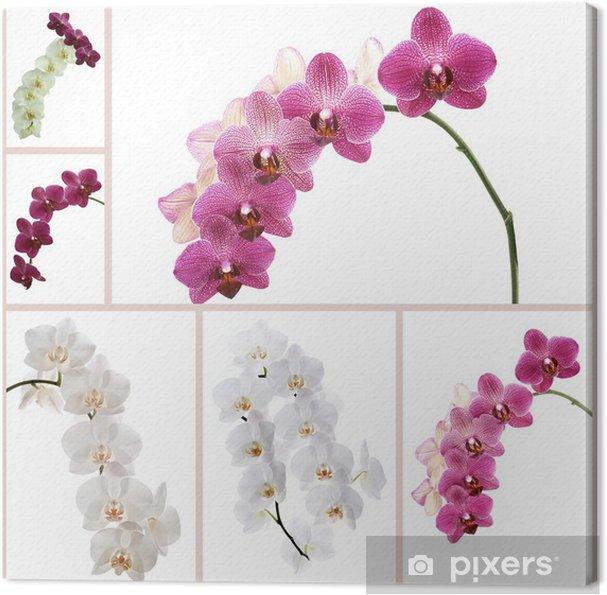Tableau sur toile Orchidées de fleurs - Fleurs