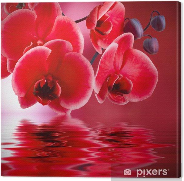 Tableau sur toile Orchidées rouges avec le fond et l'eau - Styles