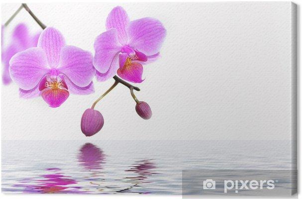 Tableau sur toile Orchids - Thèmes