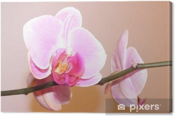 Tableau sur toile Orchids - Fleurs