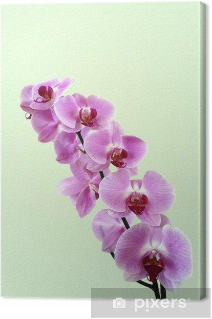 Tableau sur toile Orquideas - Fleurs