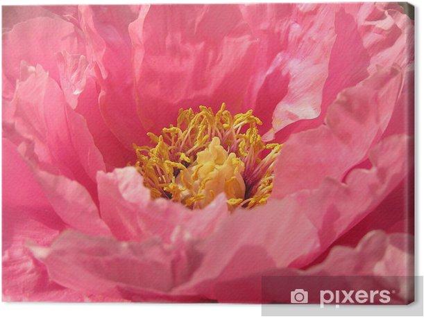 Tableau sur toile Paeonie - Fleurs