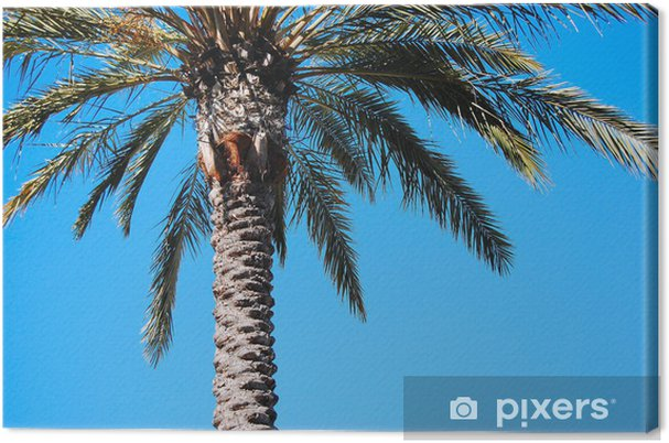 Tableau sur toile Palmier, Rodeo Drive, Los Angeles - Vacances