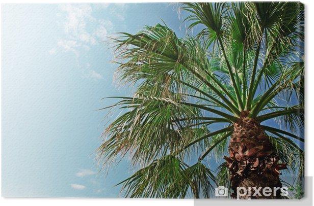 Tableau sur toile Palmier sur fond de ciel bleu - Saisons