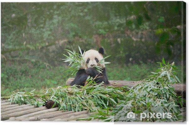 Tableau sur toile Panda géant mangeant le bambou - Thèmes