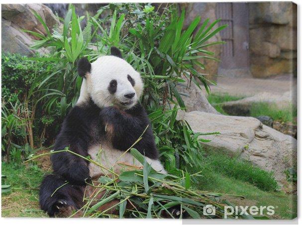 Tableau sur toile Panda mangeant le bambou - Thèmes
