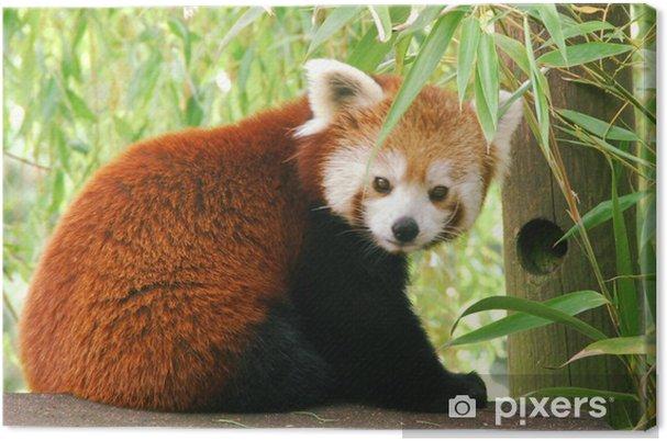 Tableau toile panda roux 3 parties triptyque 1 tableaux sur toile panda