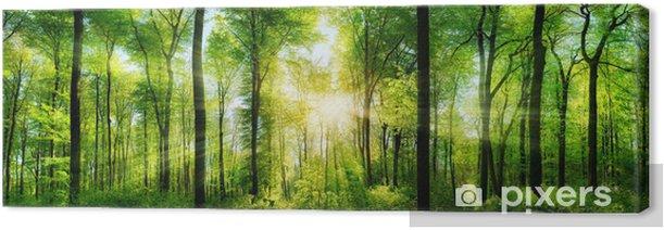 Tableau sur toile Panorama de la forêt avec des rayons de soleil - Thèmes