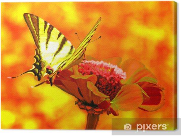 Tableau sur toile Papillon (de Rare Machaon) sur la fleur - Thèmes