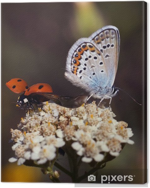 Tableau sur toile Papillon et coccinelle - Thèmes