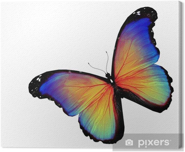 Tableau sur toile Papillon jaune bleu sur fond blanc - Célébrations